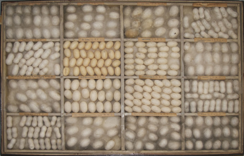 Silk cocoons made by students in the Silkworm course at Anhwei provincial vocation school in Anking, China.