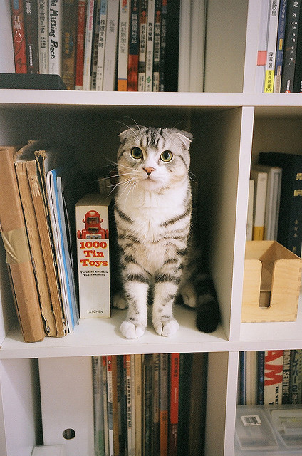 Scottish Fold bookend