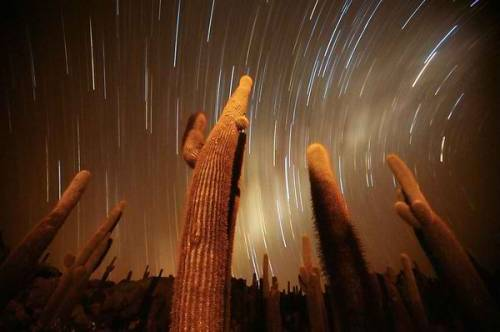 "Cactus Night Photograph by Swee Ong Wu, My Shot Giant cacti seem to reach for the stars in a newly released long-exposure picture taken from Isla de Pescado, an ""island"" within the Bolivian salt flats of Salar de Uyuni.  The salar is the world's largest expanse of salt flats, covering roughly 3,100 square miles (8,028 square kilometers) of the high Andean plateau called the Altiplano, more than 11,800 feet (3,600 meters) above sea level. Several isolated islands in the flats are made from fossil coral reefs covered by volcanic rock, according to NASA."