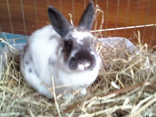 My rabbitt