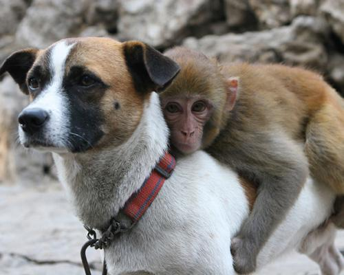 "Here's an adorable look at the most unlikely of friends — from inseparable interspecies pals to surprising bonds between predator and prey — that will leave you wondering, ""Why can't we all just get along?""16 unlikely animal friendships"