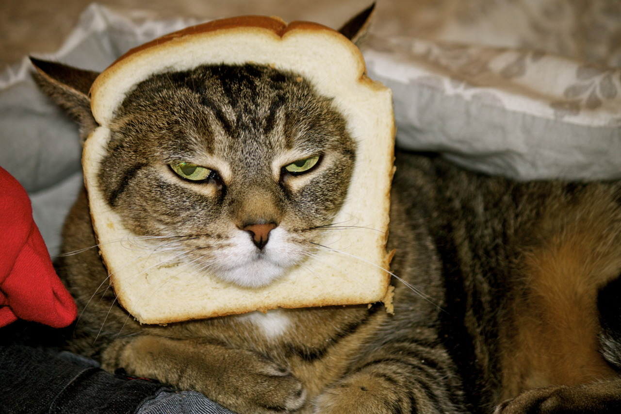 My First Cat Breading Photo & Breading by: Me (TheCraftyVeteran)