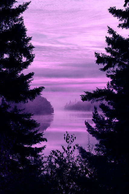 thewoodlandclearing:  purple by photoluver1 on Flickr. follow this blog for more nature pictures!