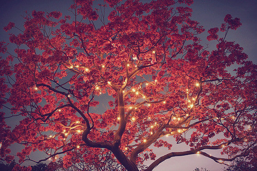Fairy lights, like the tree has come alive at night.