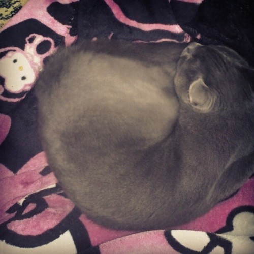 Yuki #nap #kitty  (Taken with instagram)