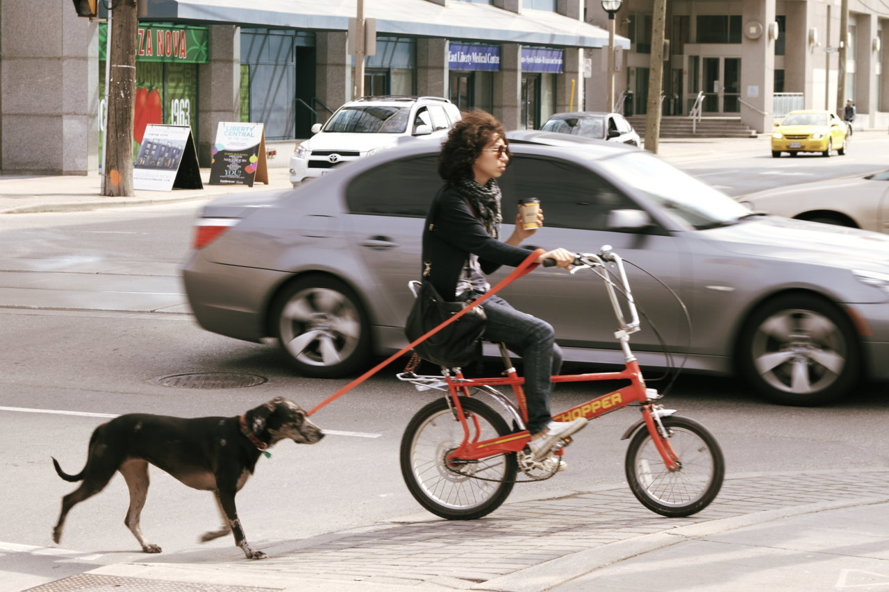 Chopper, dog & latte [Montréal Cycle Chic extra muros: Toronto, Can.]