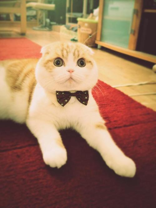 what a dapper fella <3 haha