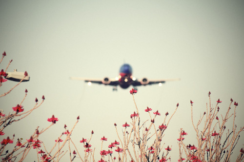 Southwest Airlines Boeing 737. Photo by C. Strife.