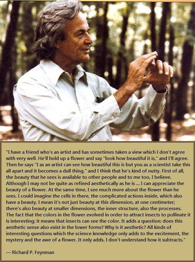 "quantumaniac:  Richard Feynman Quote  ""I have a friend who's an artist and has sometimes taken a view which I don't agree with very well. He'll hold up a flower and say ""look how beautiful it is,"" and I'll agree. Then he says ""I as an artist can see how beautiful this is but you as a scientist take this all apart and it becomes a dull thing,"" and I think that he's kind of nutty. First of all, the beauty that he sees is available to other people and to me too, I believe. Although I may not be quite as refined aesthetically as he is … I can appreciate the beauty of a flower. At the same time, I see much more about the flower than he sees. I could imagine the cells in there, the complicated actions inside, which also have a beauty. I mean it's not just beauty at this dimension, at one centimeter; there's also beauty at smaller dimensions, the inner structure, also the processes. The fact that the colors in the flower evolved in order to attract insects to pollinate it is interesting; it means that insects can see the color. It adds a question: does this aesthetic sense also exist in the lower forms? Why is it aesthetic? All kinds of interesting questions which the science knowledge only adds to the excitement, the mystery and the awe of a flower. It only adds. I don't understand how it subtracts."""