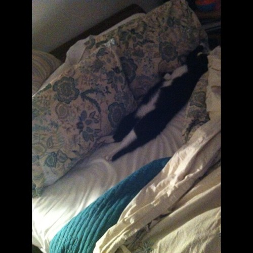 La cama es de Manolo. A mí nomás me hace un campito;( #catsofinstagram #nature #all_shots #gang_family #statigram #mextagram #mexigers #igersmx #igersmexico #iphoneography #iphonephotography #iphoneonly #iphonesia #igdaily #ignation #instahub #instagramers #instagood #instamood #instadaily #instago #photooftheday #igersdf #eboftheday #goodnight  (Taken with instagram)