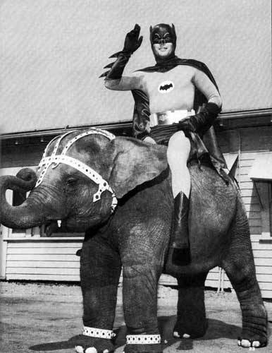 Batman riding an elephant, your argument is invalid