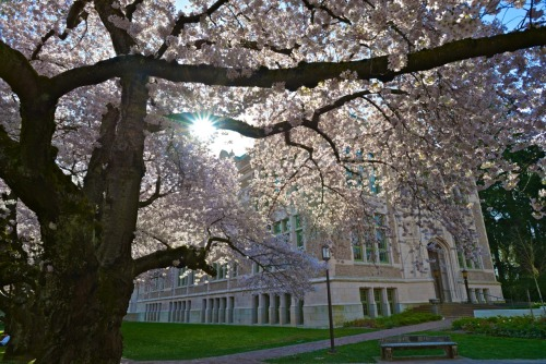 My alma mater, one of the prettiest campus in US, yet I had no time to pay attention when I was in school.