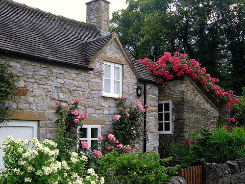 dyingofcute:  Cottage with Roses in the Village of Thorpe on the Tissington Trail in Derbyshire