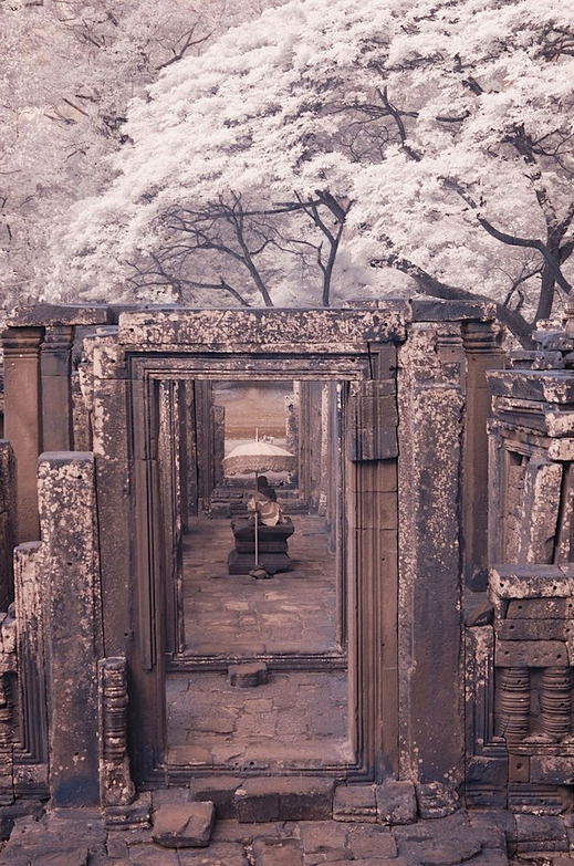 Cherry blossoms and a Buddha. #LOVELY kateoplis:  Jian Hang, Cambodia