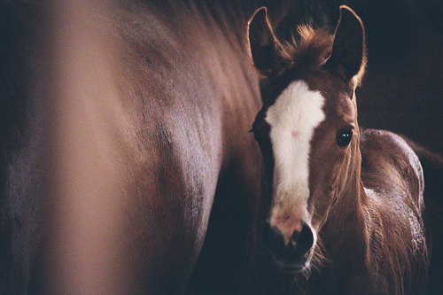 (via beautiful, cute, foal, horse, pony - inspiring picture on Favim.com)