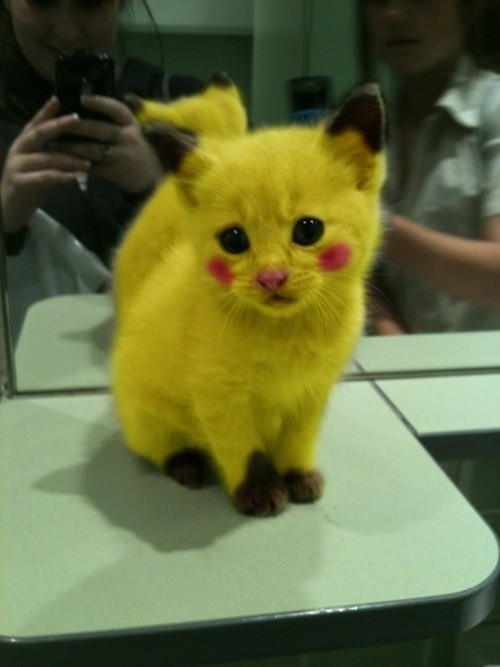 PIKACHU IS ALIVE! omg I just wonder what did his owner did to this baby ^^