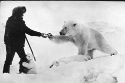 WTF? don't shake hands with a polar bear? one is clearly trying to rip your leg apart.