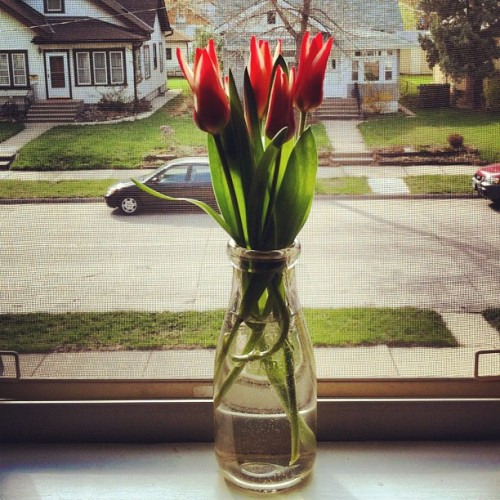 Tulips from my front yard. A lovely day to have the windows wide open.