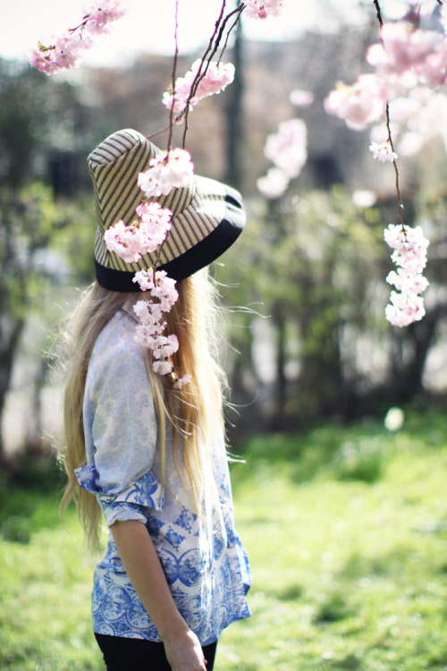 paulinabelle:  (via 5 inch and up: Cherry blossom)