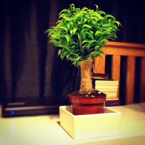 New plant (Taken with instagram)