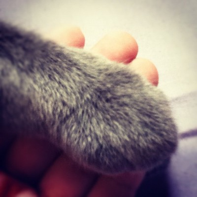 Grizzly's paw on my hand. We love each other.