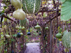 wallacegardens:  Hanging Vegetable Garden, Rosemoor Royal Horticultural Garden, Great Torrington, England.