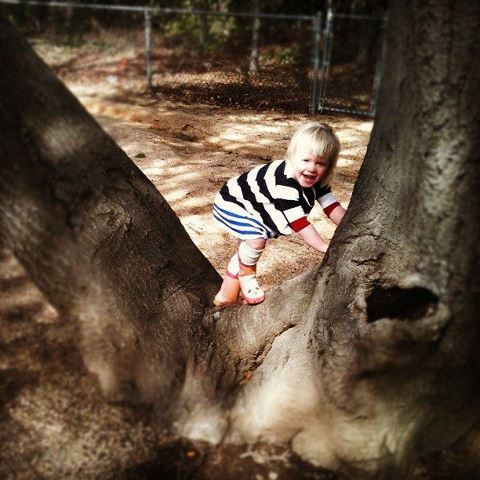 climbing trees at the park March 2012