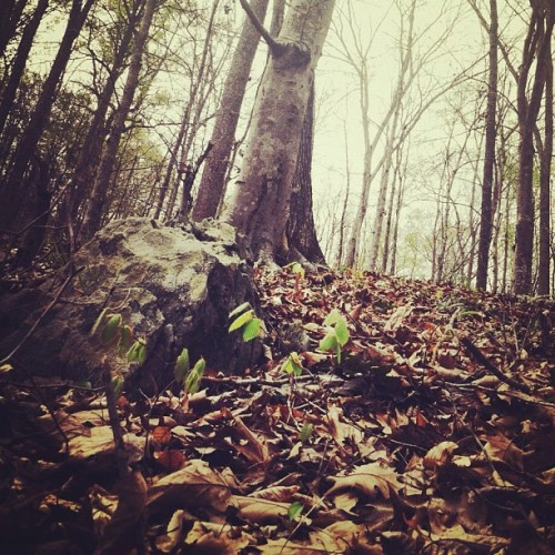 more from the forest. (Taken with instagram)