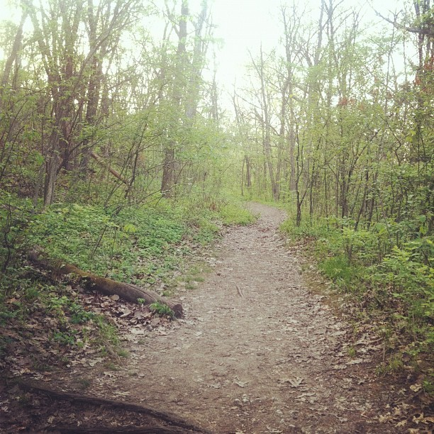Evening run through Shawnee Mission Park (Taken with instagram)