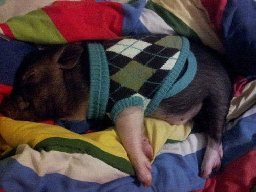 thekissthatsavedmylife:  :D my baby  Sweater vests really enhance the nap.