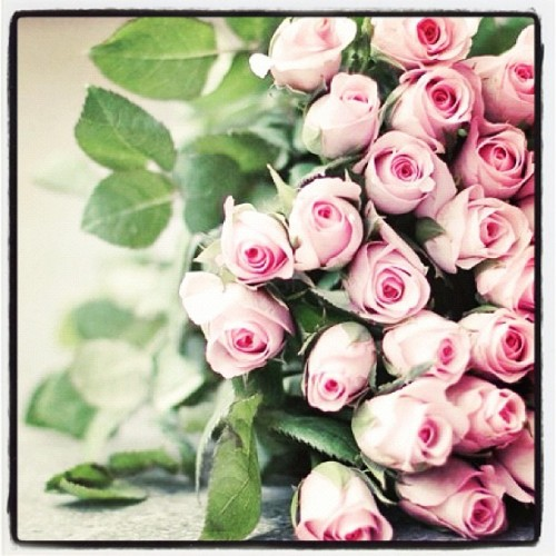 thefashionoffice:  Holiday Flowers : #Pink #Roses