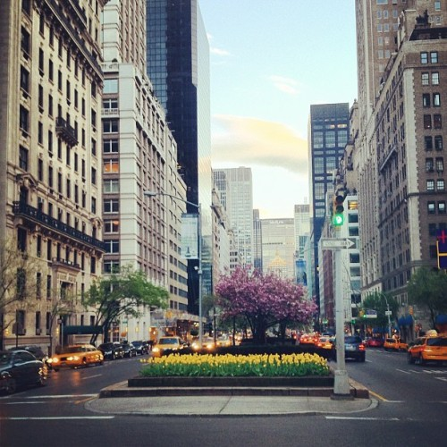 my park avenue shots would never be as beautiful.