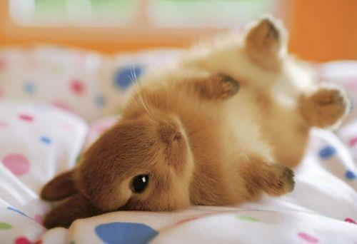 janinapv:  Here's a bunny for you. HAPPY EASTER!!!