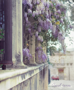 April tones by ·meisi· on Flickr.