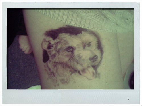My first tattoo of my best friend, my little Sammy. it's unfinished & it was done by Vic at Chameleon in Latrobe, he is amazing.