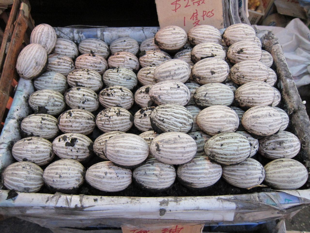 striped eggs.