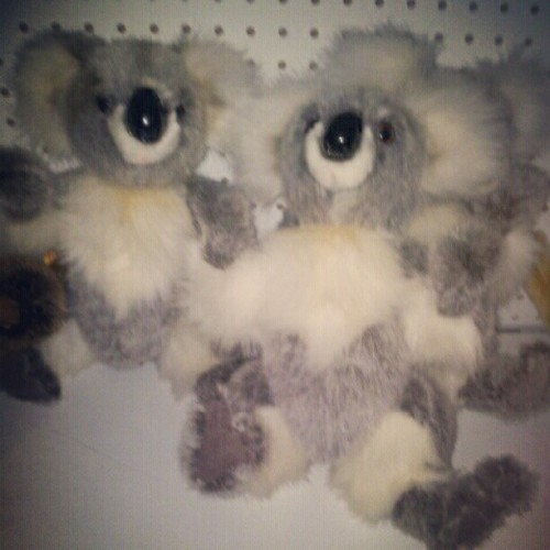 I still love koala a lot!♡ (Taken with instagram)