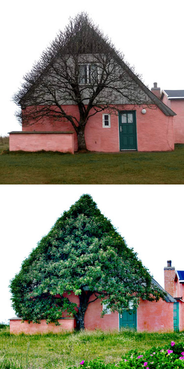 Marianne Kjølner, photograph, tree in Denmark.