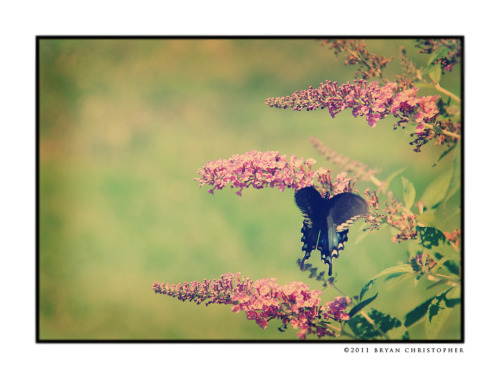 Butterfly ~ Bryan Christopher ©2011 Bryan Christopher