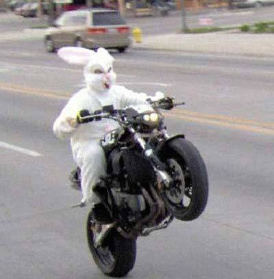 cockenblog:  May your Easter be full of sick wheelies.