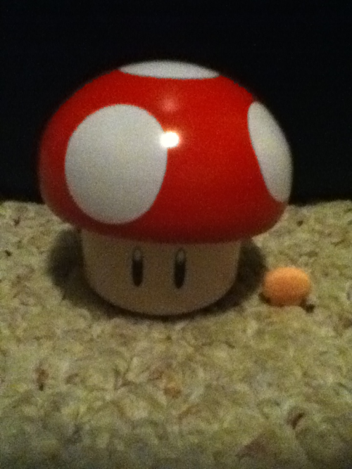 I got a mario mushroom XD The little mushroom to the right is how the mints inside it look like c: Every one i eat I gain powah!!!! DIE GOOMBAS!!!! ROAR!!!!