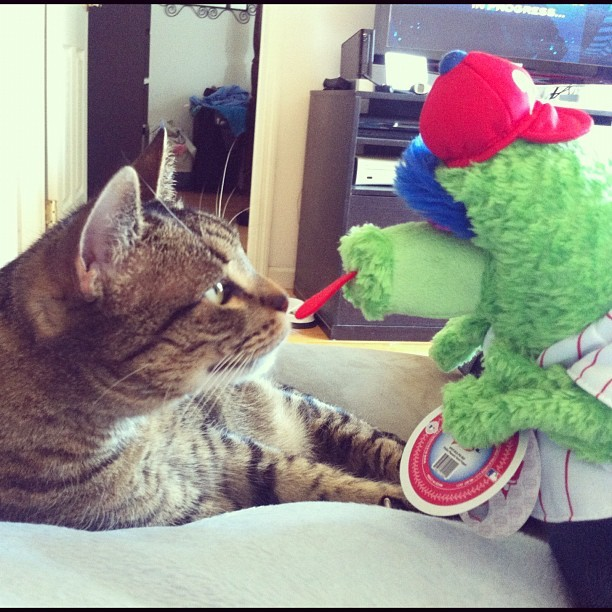 Cat meets Phanatic. (Taken with instagram)