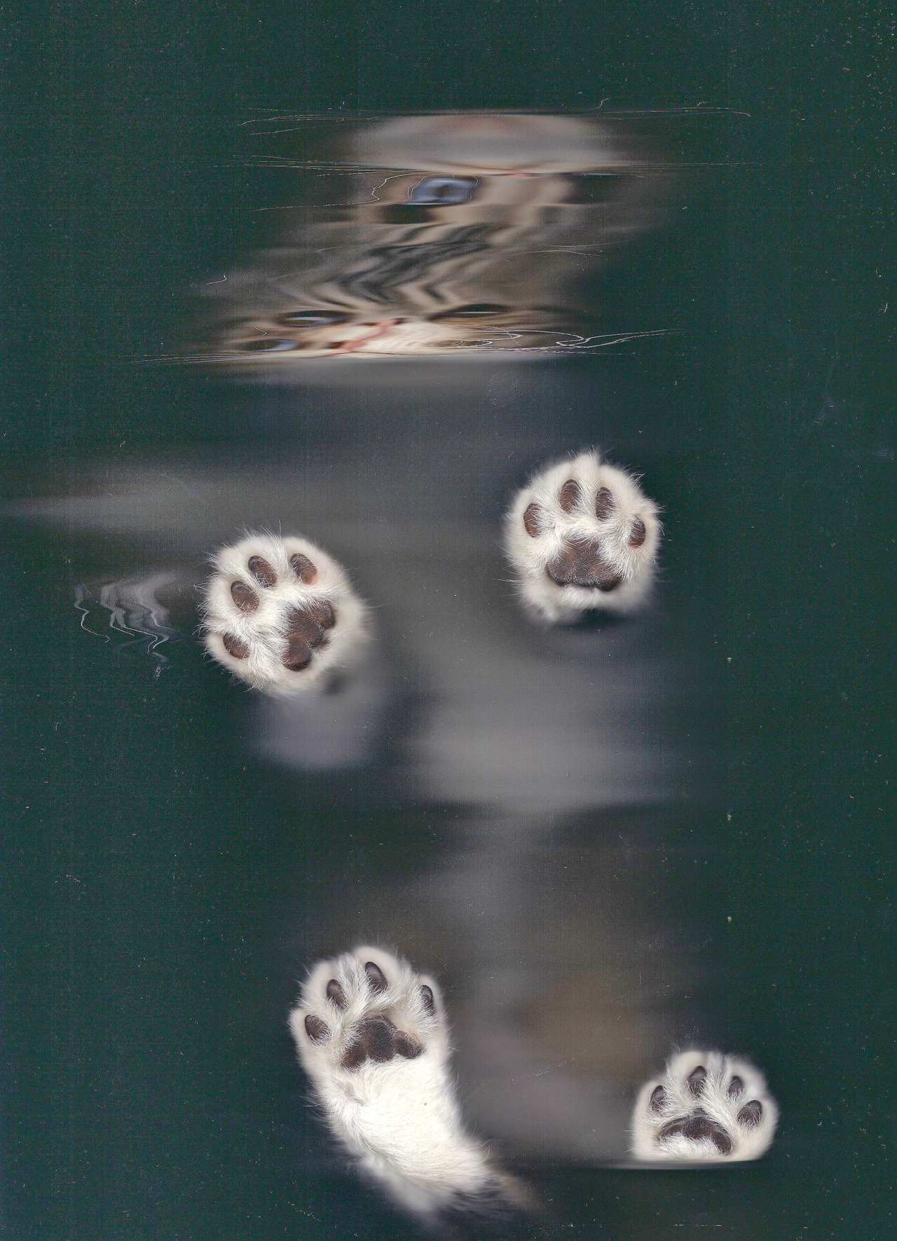 Made a Cat Scan of my new Kitten Michael Dinner