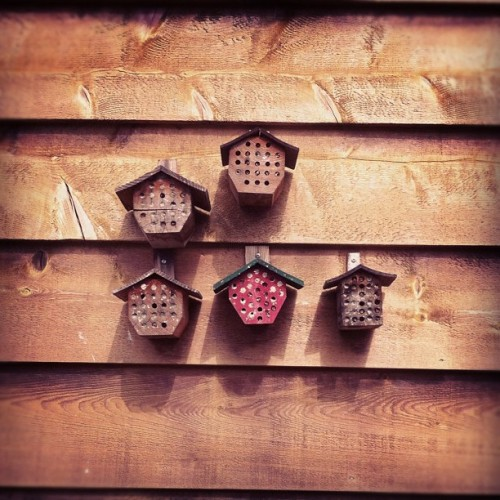Mason Beehives [via meetyouat] VIDEO: How to build a Mason bee homehttp://youtu.be/qvD9oIk9fpA