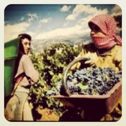 Lebanon #lebanon #liban #lubnan #libano #farming #beqaavalley #vineyard #arabs #lebanese #middleeast #mediterranean ##jj_forum #spring #igdaily #igaddict #all_shots #ig #igers (Taken with instagram)