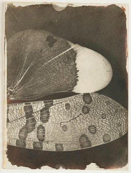 stilllifequickheart:  William Henry Fox Talbot Insect Wings 1840