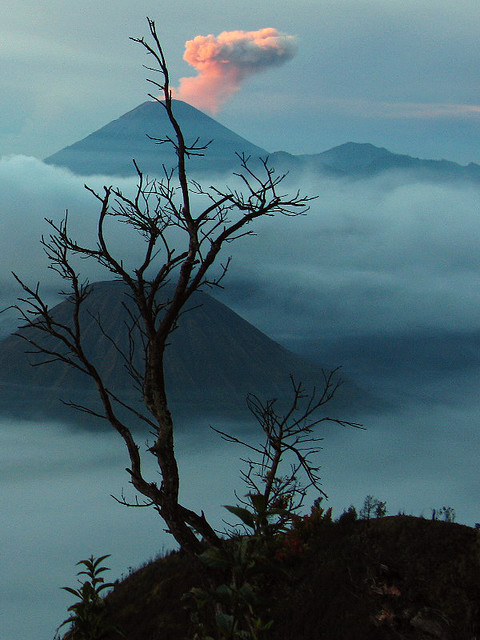 coffeenuts: Mount Bromo 038 by Kaki Bakar on Flickr.