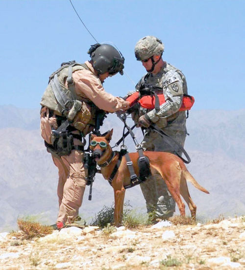markgdietrich:  Mans best-friend getting prepared for a helicopter hoist.