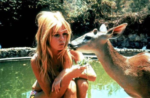 bardot and bambi.