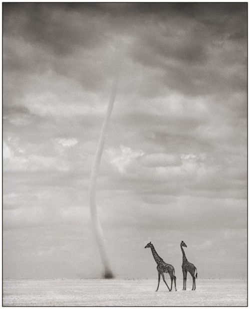 asaya:  Wildlife Photography by Nick Brandt via